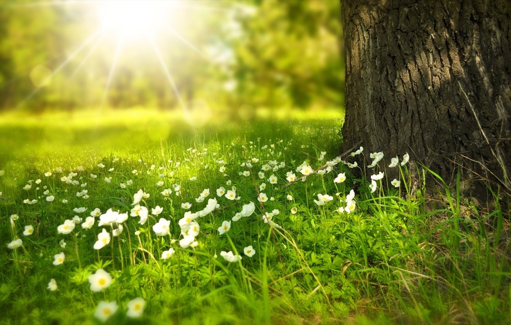 Sonne - Wiese_larisa_k-pixabay