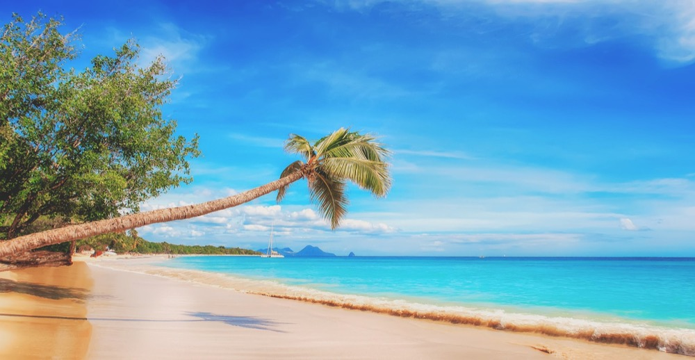 Sommer - Strand - Sonne - Palme_walkerssk-pixabay