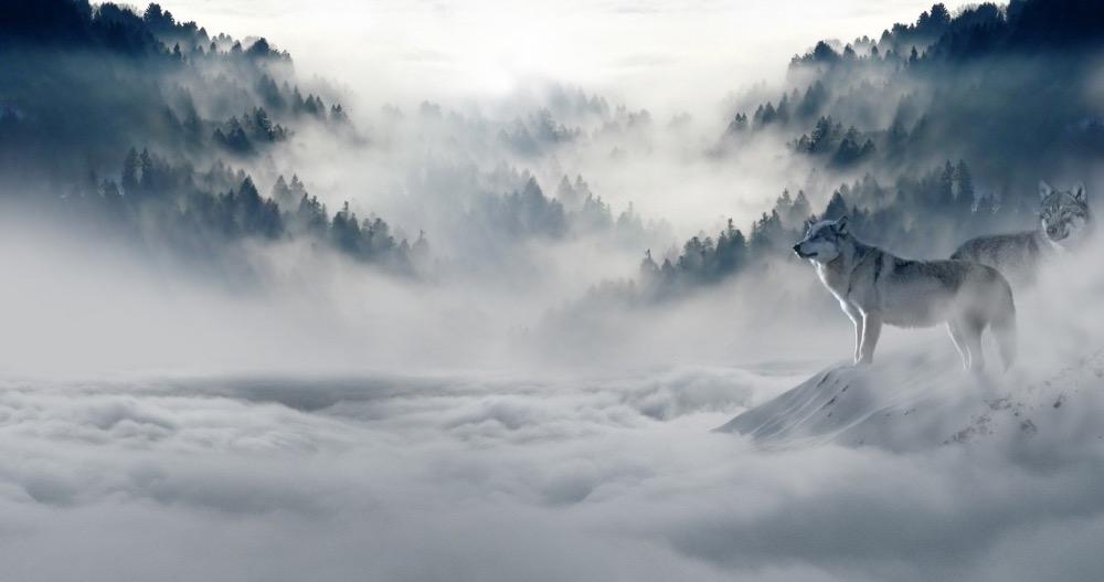 Winter - Schneelandschaft - Wolf_comfreak-pixabay